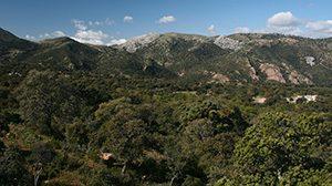 p001_monte_mediterraneo_y_nucleo_de_razas_ganaderas