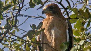 p002_ornitologia_y_hides_para_profesionales